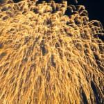 愛知川祇園納涼祭花火大会2015年|駐車場やおすすめスポット&場所!