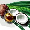 ココナッツオイルの効能や効果、ダイエット効果や期間、注意点も!