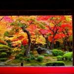 紅葉の京都 おすすめスポットご紹介!見頃はいつ?楽しみ方も知りたい!